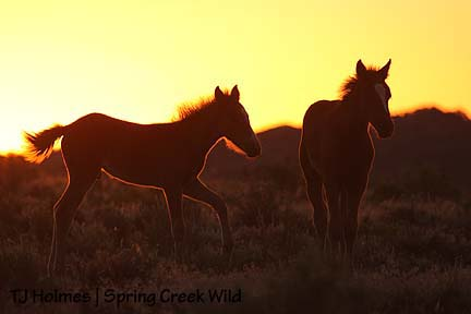 Pinon and Ember at sunset