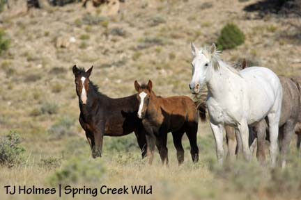 Pinon, Storm and Alpha