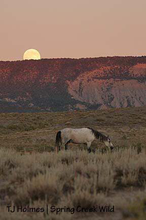 Basin moonrise
