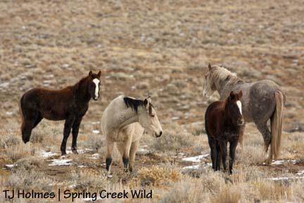Storm, Kestrel, Ember and Sundance