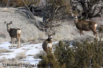 Deer central