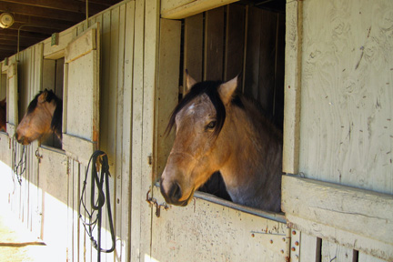Justice in his stall