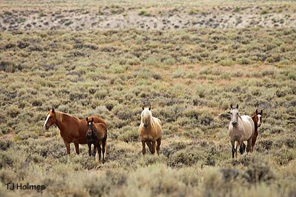 Corona with mares