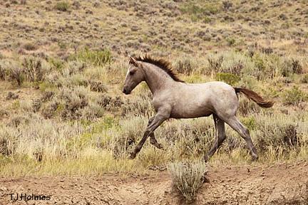 Her handsome colt