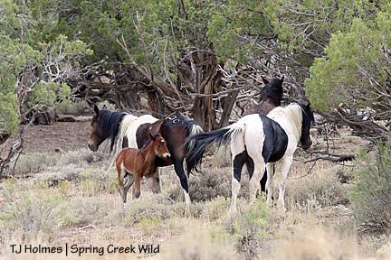 Kiowa and colt
