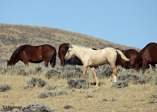 0924palfoalhorses