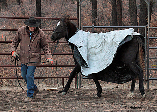 Vern leads Asher with a tarp on his back. Asher is completely unphased.