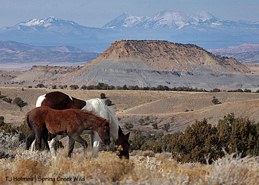 Seneca and Chipeta, Filly Peak and the La Sal Mountains in the background.