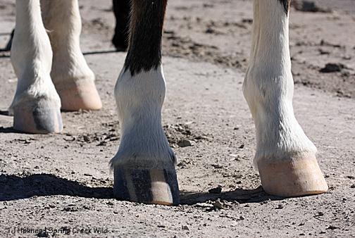 Hannah's hooves