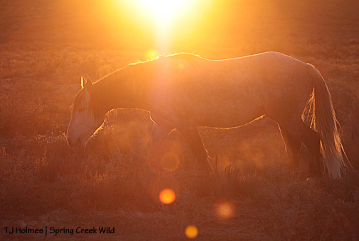Comanche at sunset.