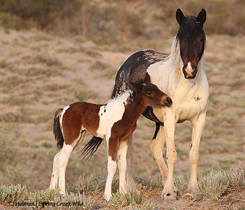 Reya and her new baby filly.