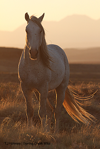 Chrome at sunset.