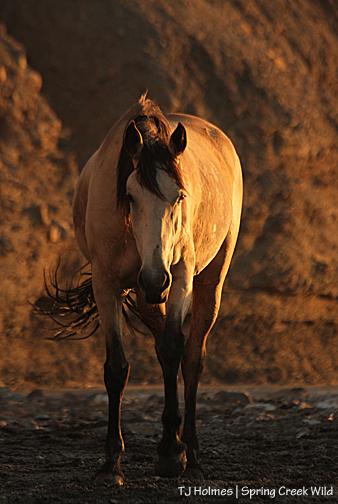 Kestrel in sunset light in the Spring Creek arroyo.