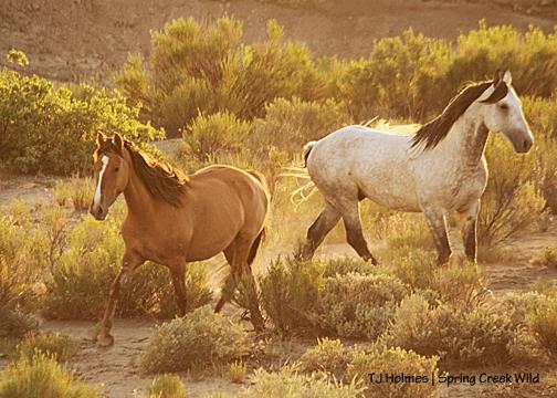 Mona and Comanche