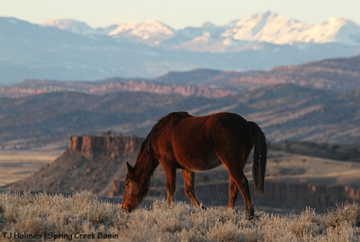 Madison, Spring Creek Basin, Disappointment Valley, La Sal Mountains