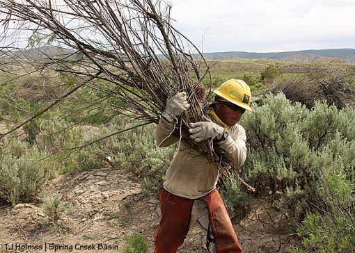 Alonzo Moses, 23, carries cut tamarisk branches to a pile to be burned later.