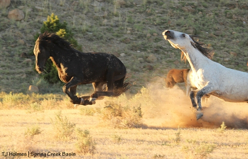Bounce levitates during a chase by Comanche.