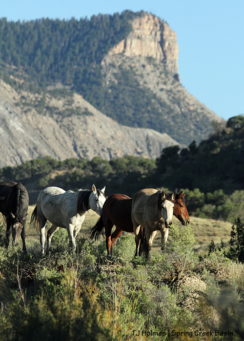 Comanche's band; unnamed promontory in the background.