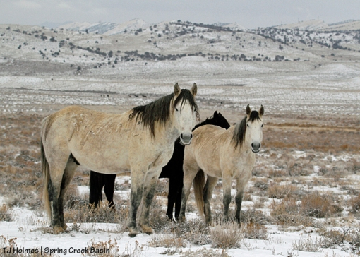 Comanche, Piedra and Aurora