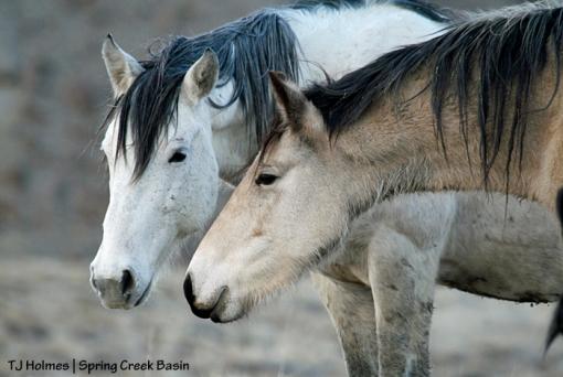 Kestrel and Comanche