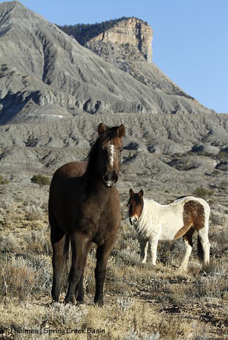 Seneca and Chipeta, McKenna Peak and Temple Butte