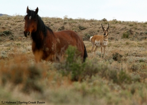 Aspen and pronghorn