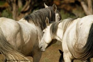 Piedra and Comanche