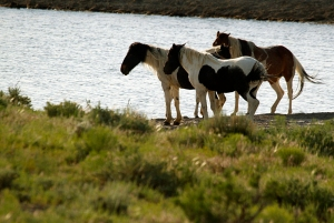 Corazon, Reya, Chuska and Puzzle at the Round Top pond.
