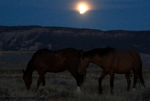 Hollywood and Shane under the lunar eclipse.