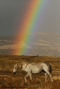 Chrome under the rainbow.
