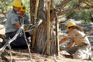Southwest Conservation Corps crew members Dillon, Jordan and Zoe place protective staves around a tree that will serve as half of an H-brace in Spring Creek Basin's southeastern fence line.