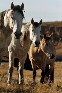 Comanche, Piedra and Kestrel