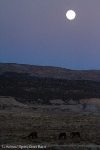 Full moon rising over Spring Creek Basin.