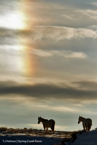 Houdini and Alegre under New Year's Day's sundog!