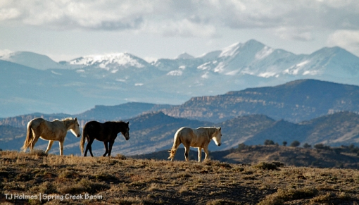 Alegre, Maia and Houdini, La Sal Mountains