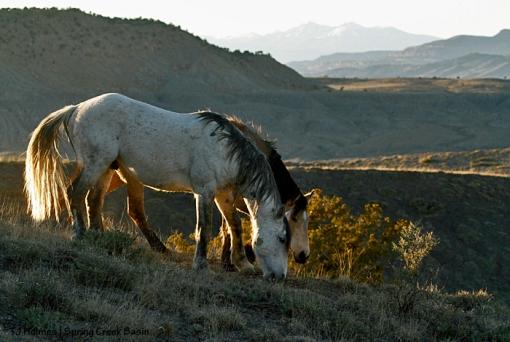Comanche and Kestrel