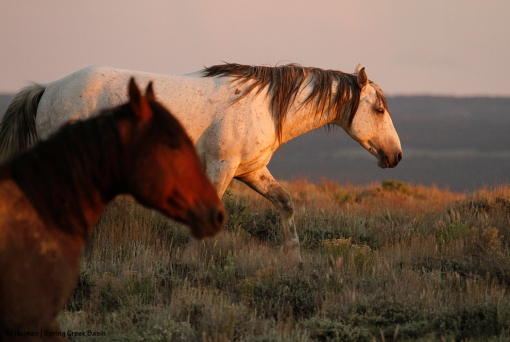 Comanche and Aspen