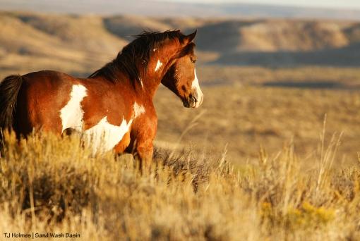 Sand Wash Basin stallion Kiowa.