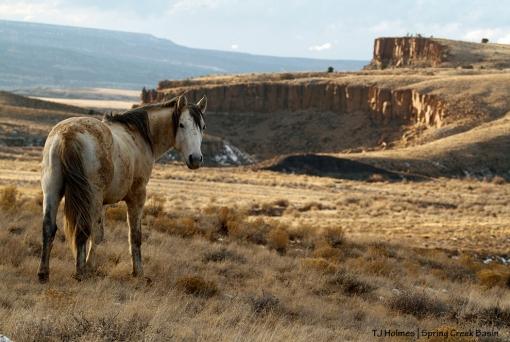 Comanche, Spring Creek canyon