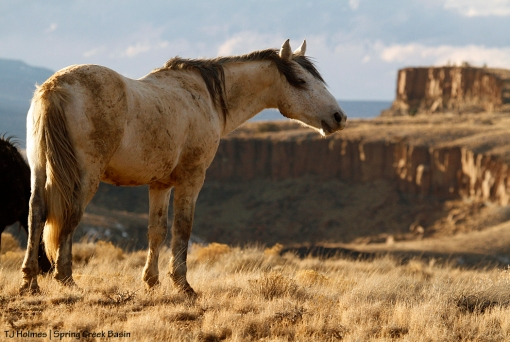 Comanche, Spring Creek canyon