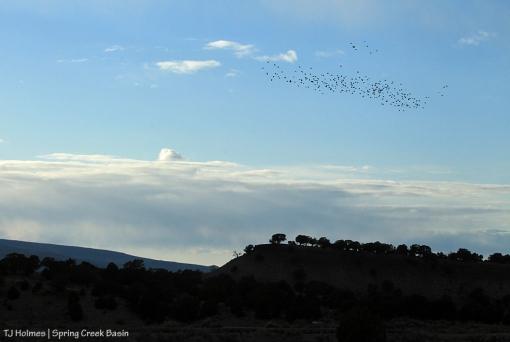 Birds over Spring Creek Basin.