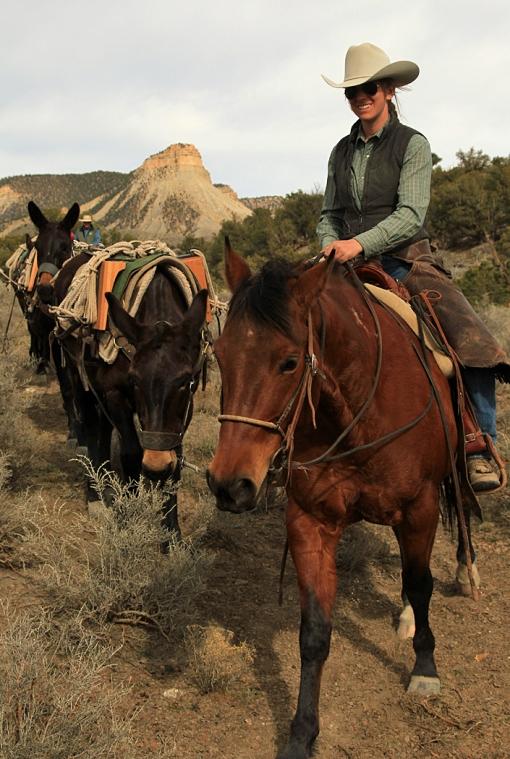 Mules Helping Mustangs Part 2 Spring Creek Basin Mustangs