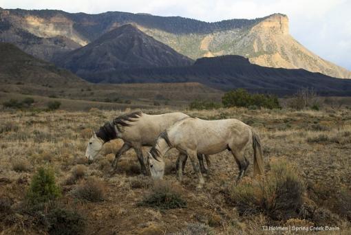 Comanche and Terra, McKenna Peak and Temple Butte
