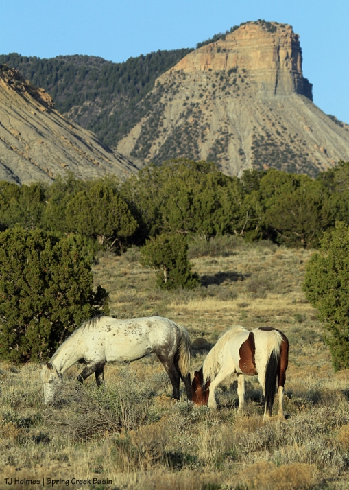 Chipeta and Ty - Temple Butte in the background.