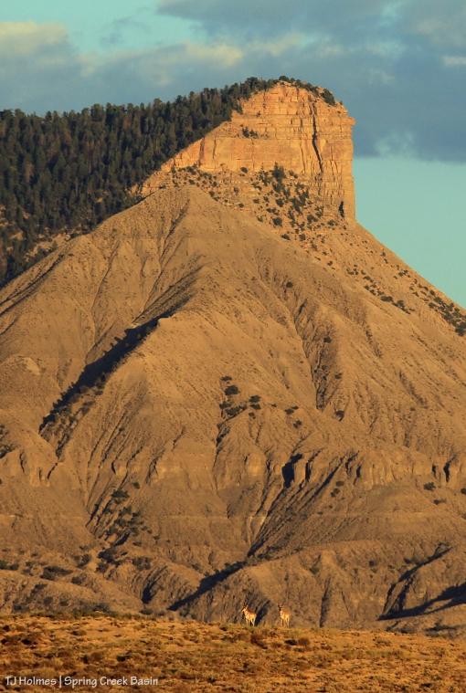 Two pronghorns below McKenna Peak and Temple Butte in Spring Creek Basin.