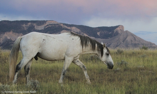 Comanche, McKenna Peak, Temple Butte