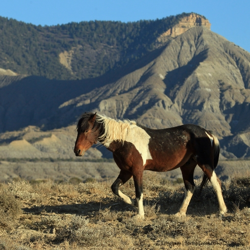 S'aka; McKenna Peak and Temple Butte