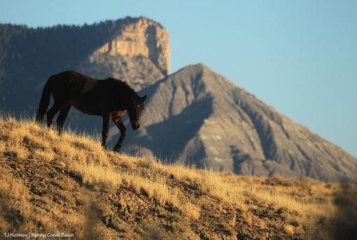 Cassidy Rain; McKenna Peak and Temple Butte