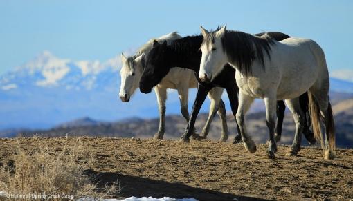 Comanche, Aurora and Piedra; La Sal Mountains