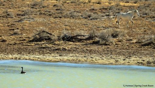 Canada goose on roller-coaster ridge pond; Kwana